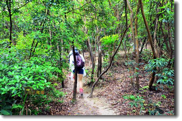 广东观音山国家森林公园 旅游攻略  春末的观音山,沿着佛光路,虔诚